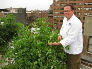 Tower Garden on New York Roof Top