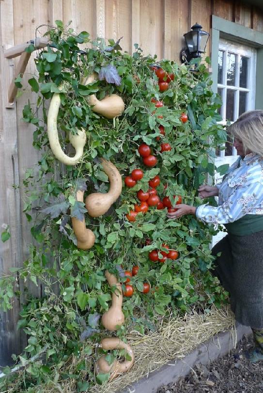 Vertical Garden Patio picture